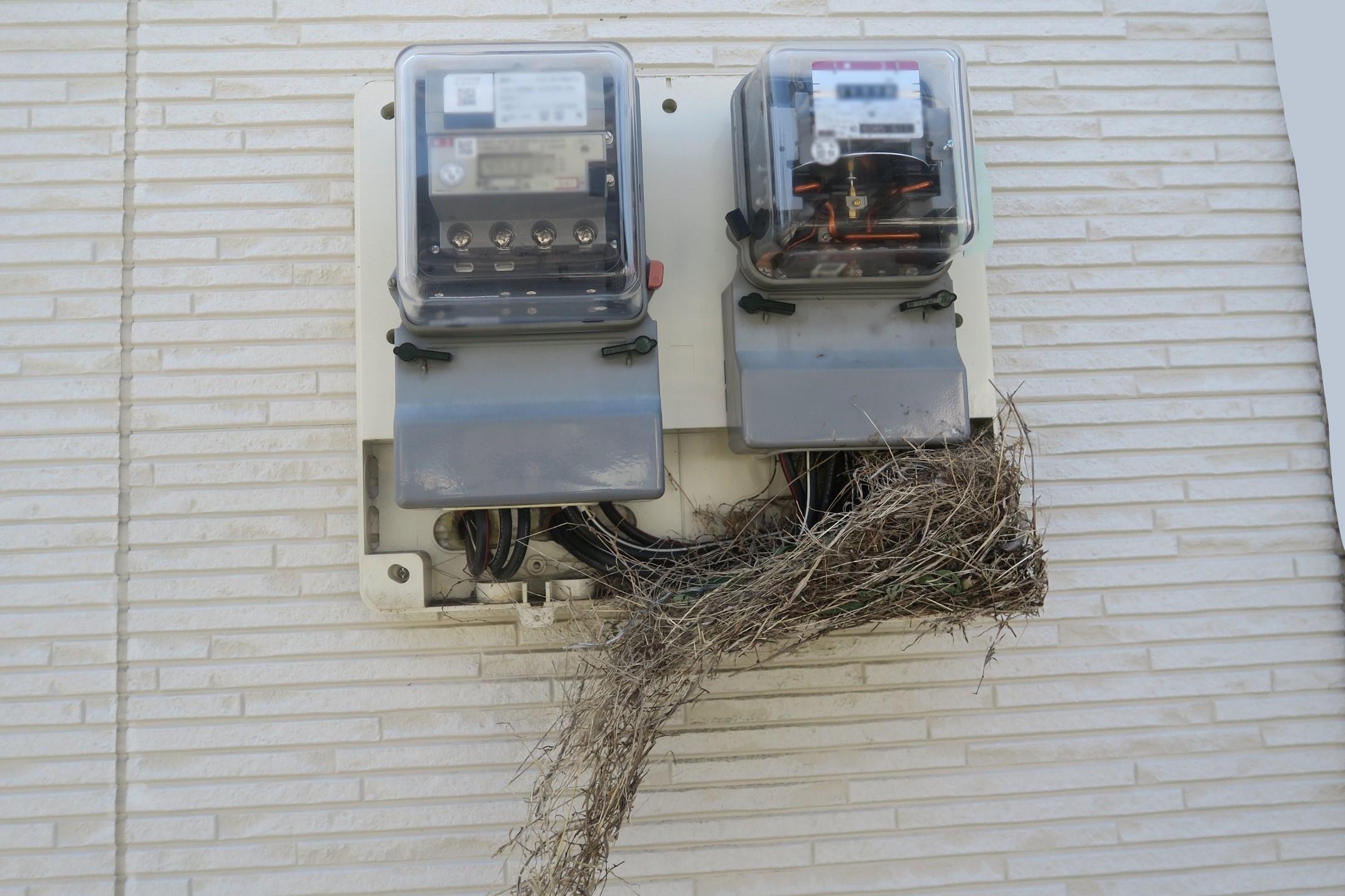 【100均】電気メーターにスズメの巣を作らせない対策方法