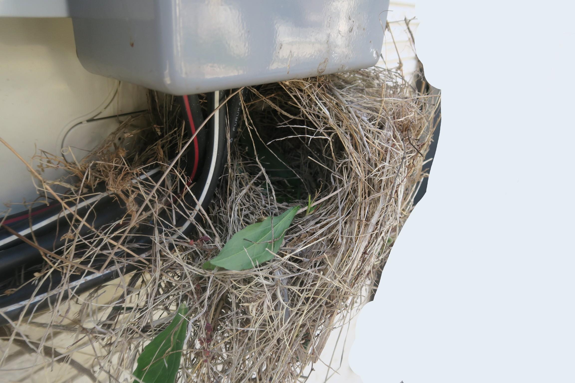 電気メーターに作られたスズメの巣